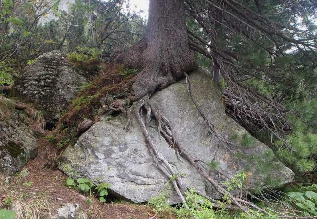 Strom nebo skála
